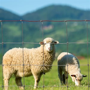 """Fence 48"""" X 330' For Goat And Sheep (Galvanized Wire Class 1)"""